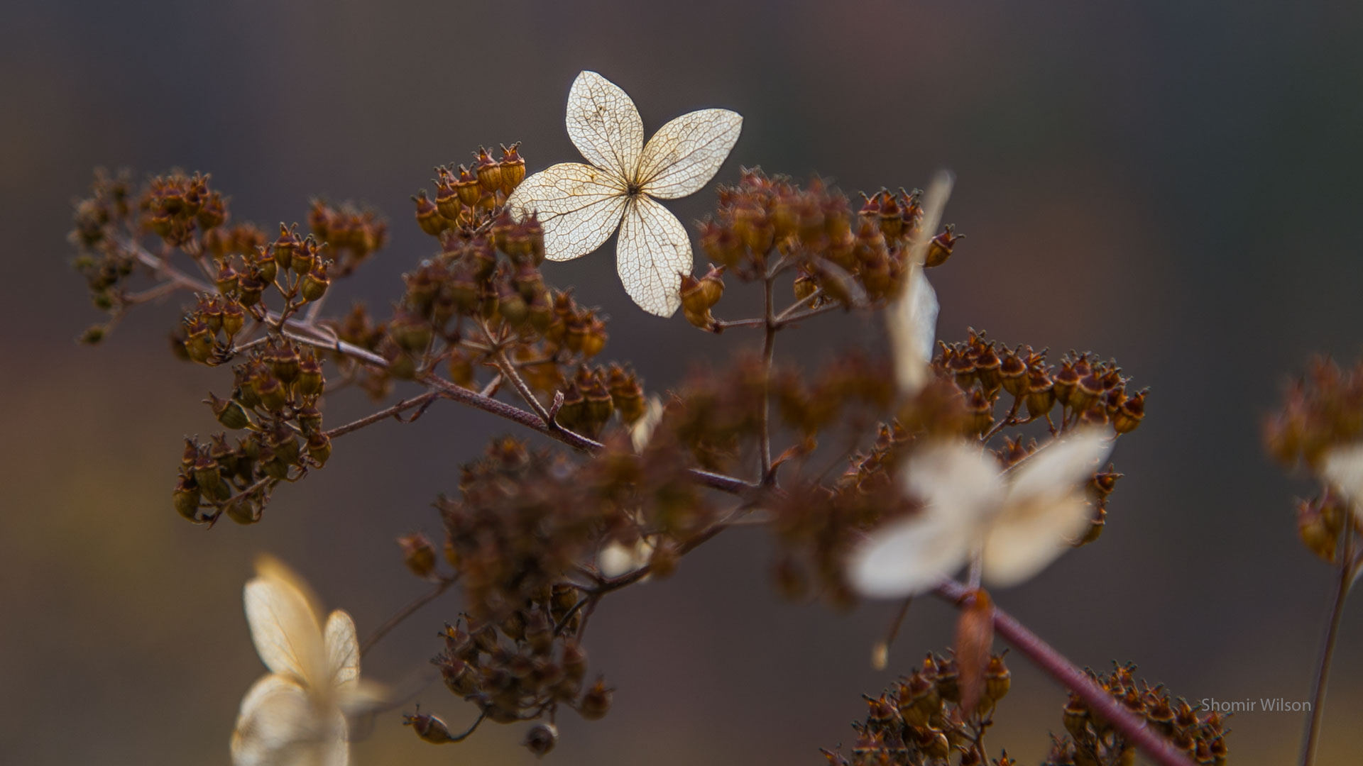 dried flowers on twigs