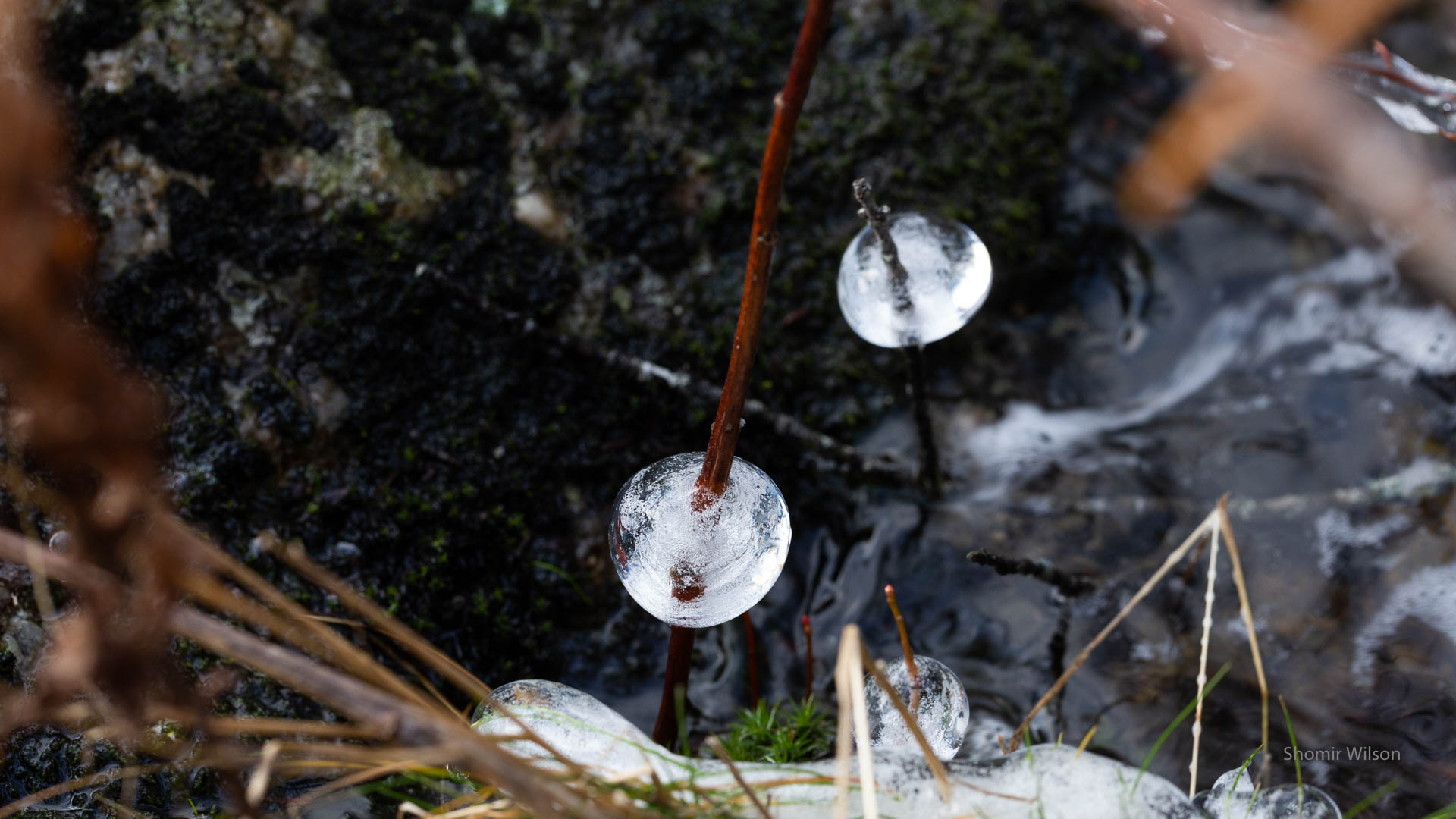 ice spheres attached to twigs