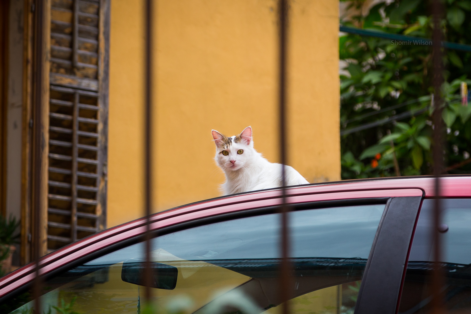 Cat sitting on top of a car