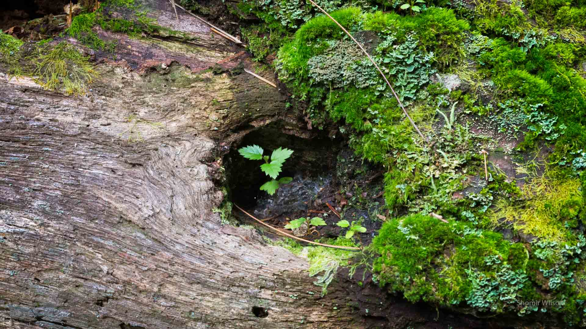 small plants and moss growing on a tree trunk